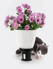 pennello gatto
